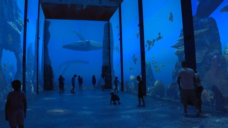 Les fonds marins australiens comme si vous y étiez grâce à une surface de projection de 650m². (France 3 Côte d'Azur / S. Neuquelman)