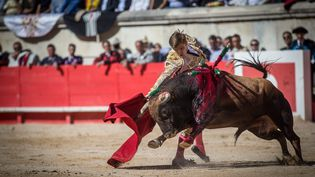 Une corrida dans les arènes de Nîmes (Gard), le 16 septembre 2017. (MAXPPP)