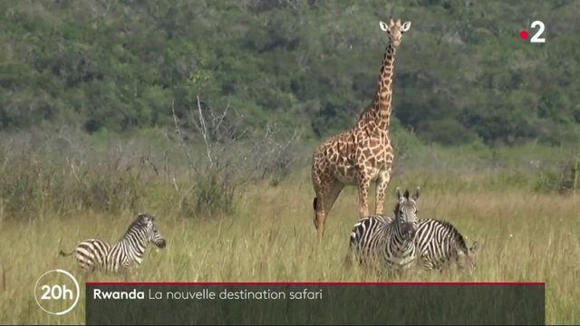 Le Rwanda, nouvelle destination de safari en Afrique