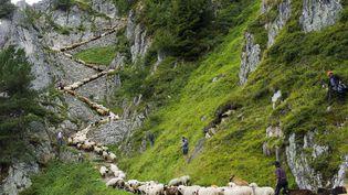 Transhumance en zig-zag pour ces moutons du canton de Valais (Suisse), le 25 août 2012. (JEAN-CHRISTOPHE BOTT / AP / SIPA)