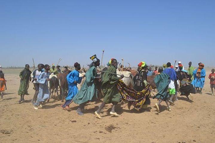 Danse d'éleveurs avec les bœufs au Mali.Fasokan/Wikimedia,CC BY-SA (Fasokan/Wikimedia, CC BY-SA)