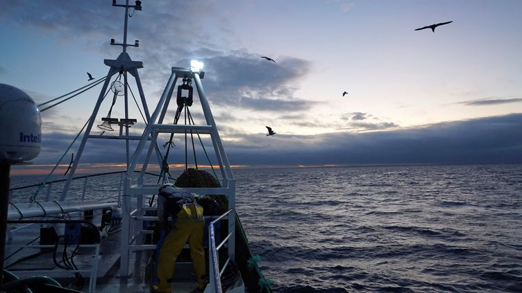Un pêcheur à bord d'un chalutier en mer du Nord, au large des côtes de l'Angleterre, le 21 janvier 2020. (WILLIAM EDWARDS / AFP)