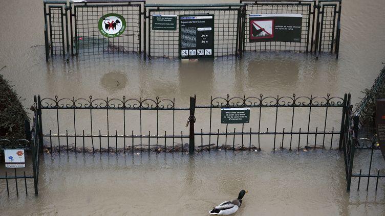 Un canard prend ses aises dans le square du Vert-Galant, complètement submergé, sur l'île de la Cité, à Paris, le 22 janvier 2018. (STEPHANE DE SAKUTIN / AFP)