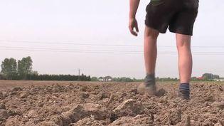La sécheresse frappe le département du Nord. Il a été placé en alerte. Pour les agriculteurs, les économies d'eau risquent d'être difficiles. (FRANCE 2)