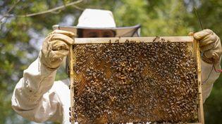 Un apiculteur travaille et ouvre ses ruches pour verifier la production de miel, le 17 mai 2021 à Toulouse (Haute-Garonne). (ARNAUD CHOCHON / HANS LUCAS / AFP)