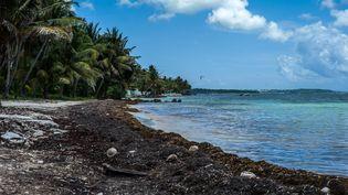 Certaines plages de Guadeloupe sont littéralement noyées sous les sargasses. (MATTHIEU MONDOLONI / RADIO FRANCE)