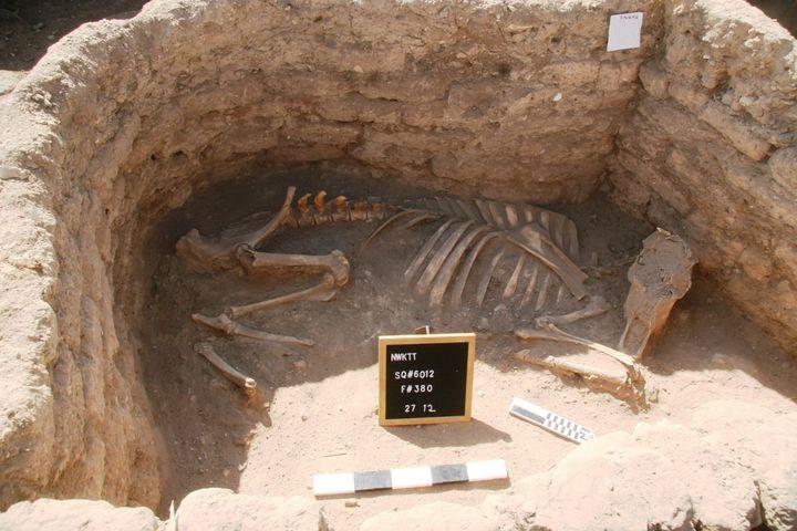 Squelette d'animal mis au jour dans la cité antique égyptienne (8 avril 2021) (CHINE NOUVELLE / SIPA / XINHUA)