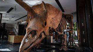 """Letricératops """"Big John"""", photographié le 31 août, vendu aux enchères à Drouot à Paris le 21 octobre 2021 pour6,6 millions d'euros (CHRISTOPHE ARCHAMBAULT / AFP)"""