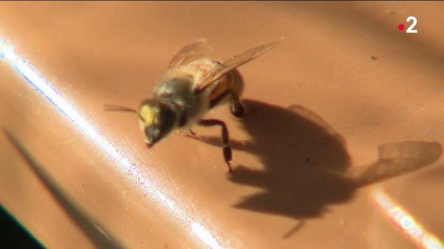 Abeilles : les apiculteurs s'équipent pour faire face aux vols de ruches