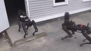Deux robots-chiens pénètrent dans un bungalow aux USA. (CAPTURE D'ECRAN TWITTER)
