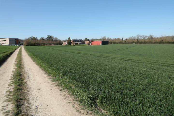 Un champ du domaine de Grignon (Yvelines), sur lequel un des candidats projette de construire des logements, photographié le 30 mars 2021. (THOMAS BAIETTO / FRANCEINFO)