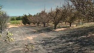 En direct de Générac (Gard), Camille Nowak fait le point sur le violent incendie qui est survenu hier, mardi 30 juillet, et sur la mobilisation des pompiers qui se poursuit. (FRANCE 3)