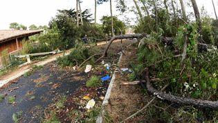 Une route de Lacanau (Gironde) barrée par des arbres et un poteau électrique couchés par la tempête Amélie, le 3 novembre 2019. (MEHDI FEDOUACH / AFP)