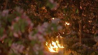 Avec la chute des températures de cette nuit du mercredi 19 avril, un dispositif exceptionnel a été mis en place dans les vergers lorrains : des brûlots et des tours de ventilation ont été installés pour limiter les dégâts causés par le gel sur les arbres en pleine floraison. (France 3)