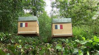 Apiculture : deux ruches d'abeilles normandes installées dans les jardins de l'Élysée (France 3)