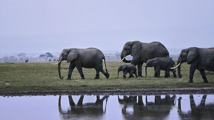 Une famille d'éléphants du parc national Amboseli au Kenya (Afrique). (TONY KARUMBA / AFP)