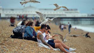 Des goélands sur la plage de Brighton (Royaume-Uni), le 6 août 2015. (GLYN KIRK / AFP)