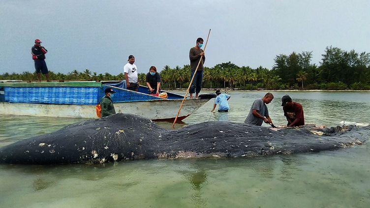 Une baleine morte s'est échouée dans le sud-est de l'Indonésie le 20 novembre 2018. Dans son ventre, six kilos de plastique ont été retrouvés. (GOH / AFP)
