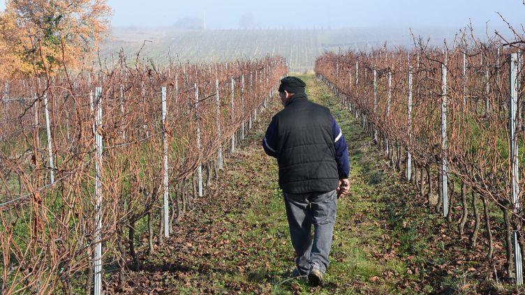 En novembre 2017, le gel avait déjà touché 80 000 des 114 000 hectares de vignes de la région bordelaise. (MEHDI FEDOUACH / AFP)