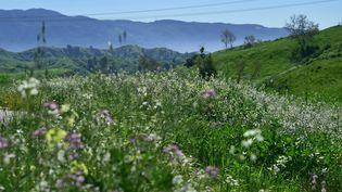 Des fleurs sauvages tapissent le parc naturel de Chino Hills en Californie (Etats-Unis), le 12 mars 2017. (FREDERIC J. BROWN / AFP)