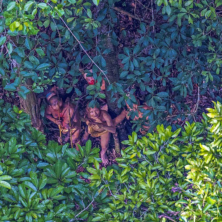 """Les """"Indiens isolés du cours supérieur de la rivière Humaitá"""", photographiés par Ricardo Stuckert le 18 décembre 2016 dans l'Etat d'Acre au Brésil. (RICARDO STUCKERT)"""