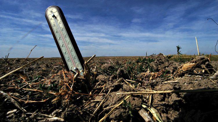Un champ ravagé par la sécheresse, dans le Loiret, le 18 août 2009. (ERIC MALOT / MAXPPP)