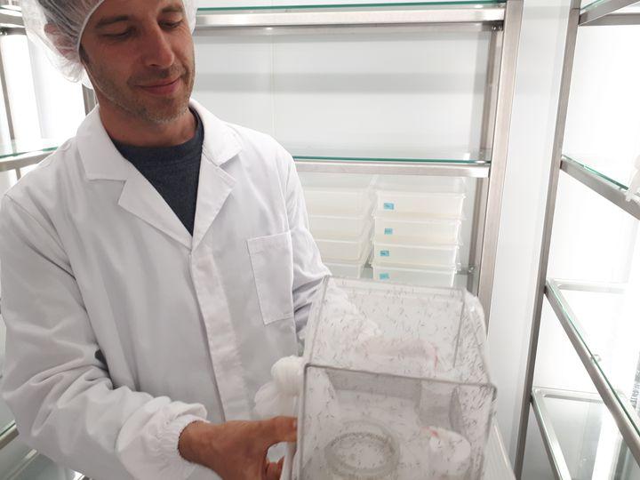 Les moustiques sont élevés et étudiés dans ces cages entourées de moustiquaires. (SOLENNE LE HEN / FRANCEINFO)