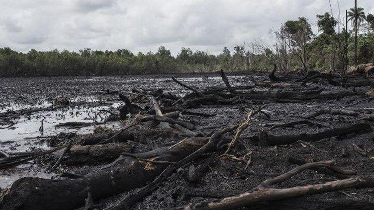 Quand le pétrole pollue la Mangrove... (STEFAN HEUNIS / AFP)