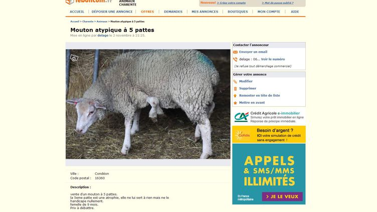 Capture d'écran de l'annonce, publiée le 2 novembre 2013 sur Leboncoin.fr, d'une brebis présentant un membre surnuméraire. (LEBONCOIN.FR)
