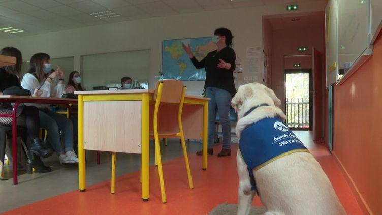 Little, labrador de 6 ans, assiste à certains cours pour atténuer les angoises des élèves (M.Nadal / France Télévisions)