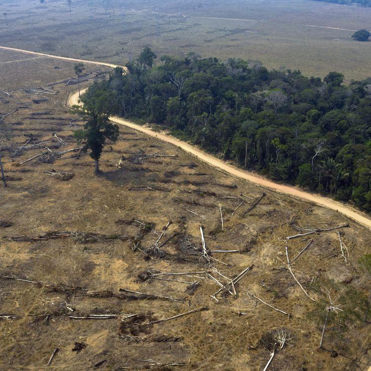 Une zone de la forêt amazonienne déboisée et brûlée le 24 août 2019 près de Porto Velho (Brésil). (CARLOS FABAL / AFP)