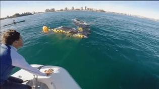 Des sauveteurs de l'association Sea World portent secours à un baleineau piégé dans des filets, au large de Gold Coast en Australie, le 15 octobre. (FRANCE INFO)