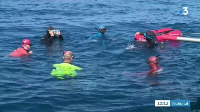 Cannes : des formations aux premiers secours en mer pour les amateurs d'apnée