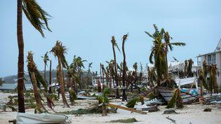 Des palmiers ont été arrachés par l'ouragan devant l'hôtel Mercure de Marigot, près de la baie de Nettle, à Saint-Martin, mercredi 6 septembre 2017. (LIONEL CHAMOISEAU / AFP)