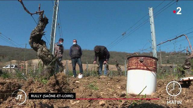 Gel: les viticulteurs ont perdu une grande partie de leurs récoltes