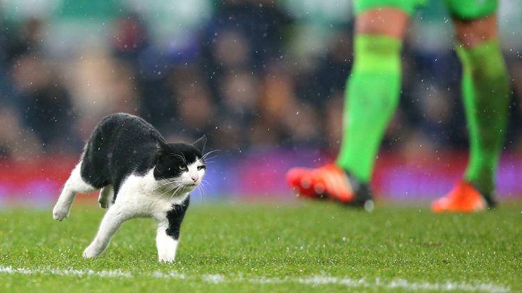 Un chat interrompt un match de foot entre Dagenham & redbridge et Everton en Angleterre, le 10 janvier 2016. (DAVE THOMPSON / GETTY IMAGES)