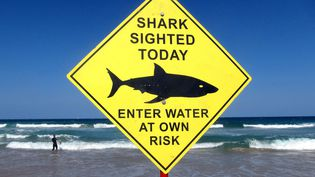 Un surfeur près d'un panneau qui alerte sur la présence de requins sur la plage de Manly près de Sydney (Australie), le 24 novembre 2015. (DAVID GRAY / REUTERS)
