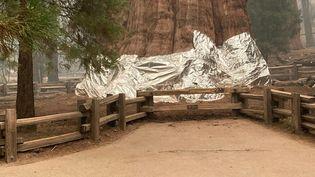 Le séquoia General Sherman enveloppé dans de l'aluminium, le 16 septembre 2021 à Sequoia (Etats-Unis). (NATIONAL PARK SERVICE / AFP)