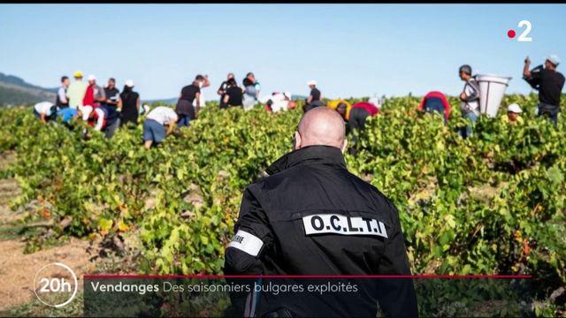 Vendanges : des ouvriers bulgares exploités dans le Rhône