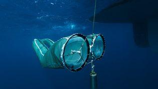 Un échantillon de plancton prélevé au cours de la mission Tara Océans. (CHRISTOPH GERIGK / BIOSPHOTO)