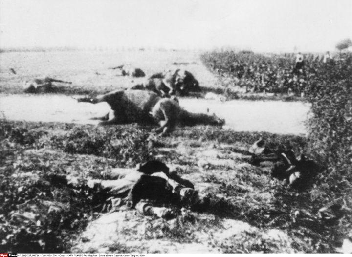 Des cadavres de chevaux et de soldats gisent au sol à Halen (Belgique), le 12 août 1914. (MARY EVANS / SIPA)