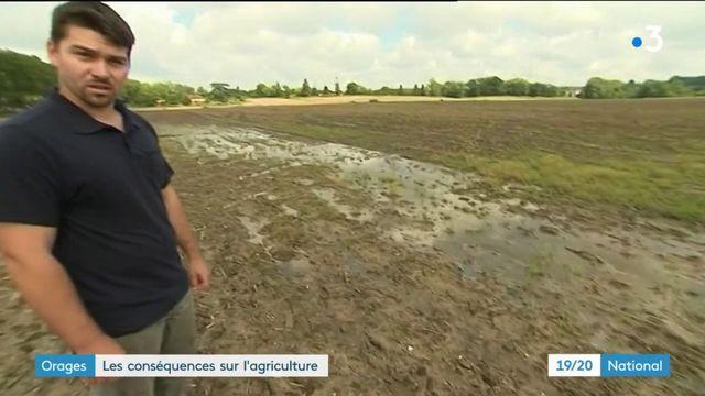 Orages : de lourdes conséquences pour les agriculteurs