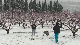 La tempête Filoména touche les Pyrénées-Orientales, samedi 9 janvier. Les premiers floconsont fait leur apparition. En direct sur place, le journaliste France Télévisions Nicolas Esturgie fait le point sur la situation. (France 3)