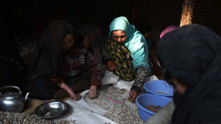 Des travailleurs afghans dans une usine de fruits sec à Kaboul le 31 décembre 2014. (WAKIL KOHSAR / AFP)