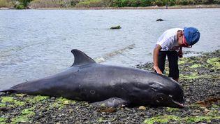 Un dauphin échoué sur les côtes de l'île Maurice, le 26 août 2020. (BEEKASH ROOPUN / L'EXPRESS MAURICE)