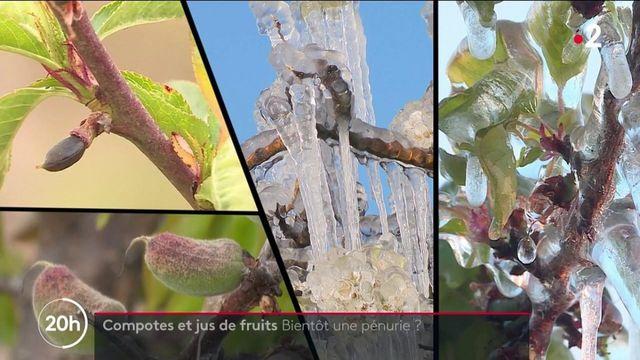 Agriculture : les producteurs de jus de fruits et de compotes craignent les conséquences du gel