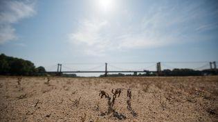 La Loire à Montjean-sur-Loire, le 24 juillet 2019 (LOIC VENANCE / AFP)