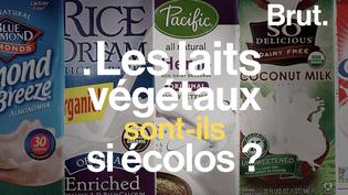 Soja, coco ou amande : les laits végétaux sont-ils vraiment écolos ? (BRUT)