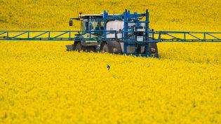 Un tracteuren plein épandage dans un champ de colza près de Borstel (Allemagne), le 6 mai 2019. (JENS BUTTNER / DPA-ZENTRALBILD / AFP)