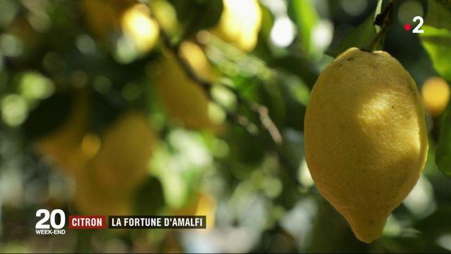 Italie : le citron, trésor d'Amalfi